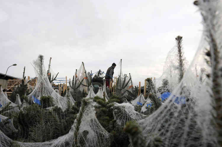 Les vendeurs de sapins de Noël au marché de Rungis, le 25 novembre 2009.