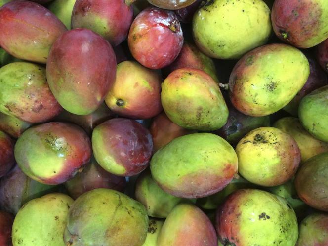 La filière burkinabée de la mangue a enregistré un chiffre d'affaires de 15 milliards de francs CFA (22,9 millions d'euros) en 2018.