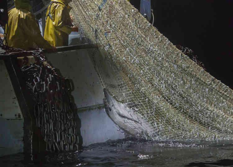 Un dauphin vivant remonté dans les filets d'un chalutier.