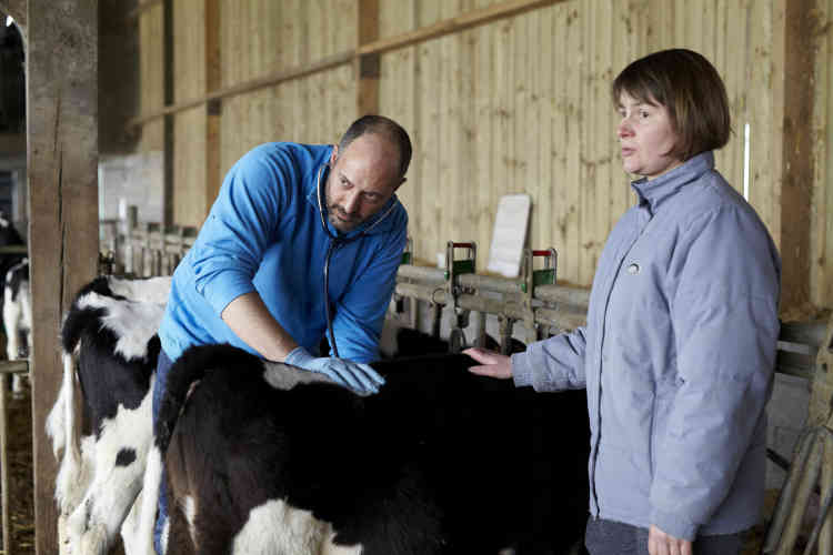 Mehdi Hakimi, vétérinaire depuis dix-huit ans, prend le pouls d'une vache dans la ferme d'une éleveuse de Mayenne, le 1ermars.