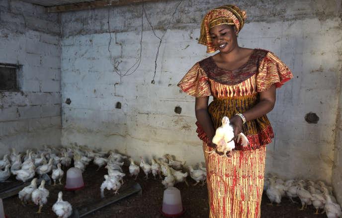 Une éleveuse de poulets à Grand-Mbao, en banlieue de Dakar (Sénégal), en mars 2017.