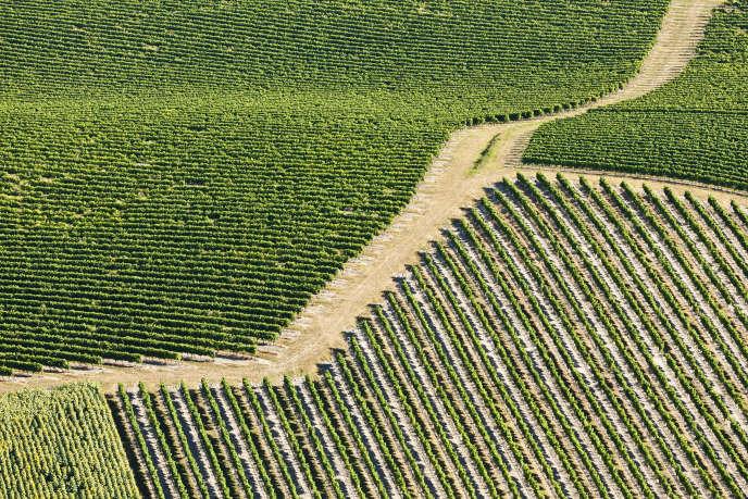 Un vignoble en Charente :l'appellation cognac a obtenu l'autorisation de planter 3474 hectares supplémentaires en 2019.