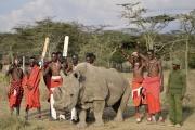 Sudan, le dernier rhinocéros blanc du Nord mâle (ici en juin 2017), a dû être euthanasié.
