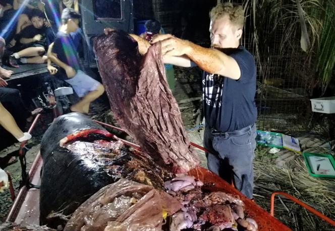 Le 16 mars 2019, Darrell Blatchley, le directeur du D' Bone Collector Museum exhibe des sacs plastique retirés de l'estomac de la baleine, échouée dans la province du Val de Compostelle.