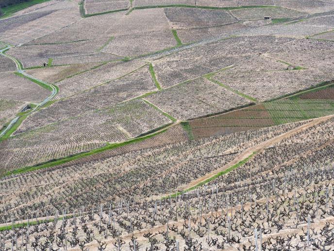 Paysage du Beaujolais : vues de vignes vers Morgon-Villié, Chiroubles, Fleurie.
