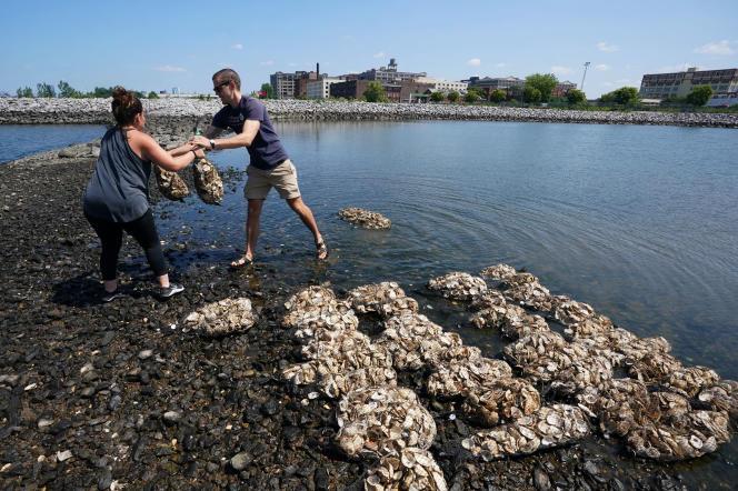 Des volontaires du Billion Oyster Projectimplantent des huîtres auBrooklyn'sBush TerminalParkdeNew York, en août 2018.