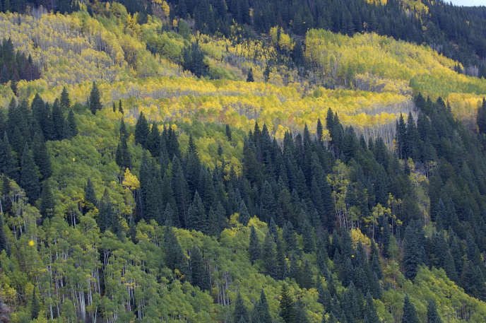 Lorsqu'une forêt (comme ici dans le Colorado) comprend très peu d'essences, la diversité des nuisibles est facilitée par la présence d'essences supplémentaires.