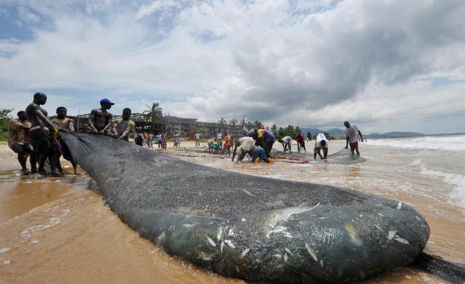 Des pêcheurs sierra-léonais sur une plage de la capitale Freetown, en septembre 2009.