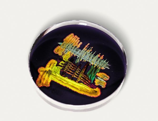 L'entreprise de biotechnologie Hoekmine BV travaille lacouleur àpartir de bactéries.