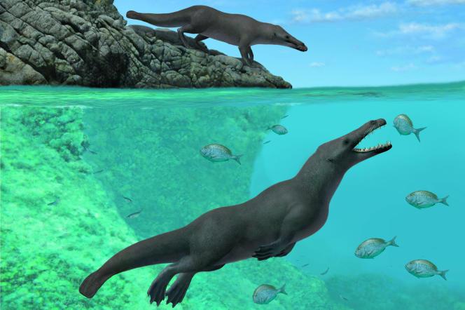 Reconstitution non datée de la baleine quadrupède.