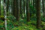 Apportant une fraîcheur réconfortante en été, les forêts constituent un milieu à la température stable et propice à la biodiversité.