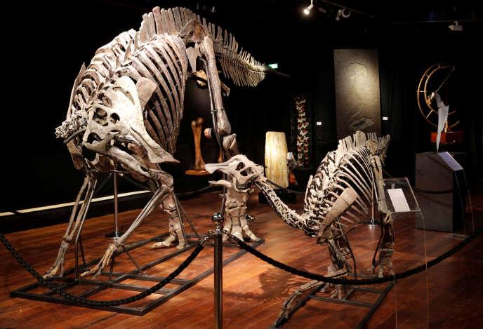 Le duo formé par un hypacrosaure à crête et son petit, à la maison d'enchères Drouaut.