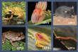 Les espèces à nommer pendant la vente aux enchères de l'ONG environnementale américaineRainforest Trust, en décembre2018.