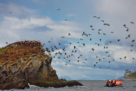 Les îlots Tucker sont peuplés de manchots de Magellan.