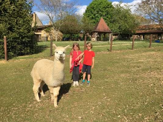 À la ferme de Sirguet, les enfants peuvent approcher les alpagas en toute sécurité.