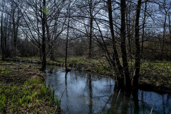 La source de Villeron, vecteur du Loing, à Villemer en Seine-et-Marne, le 29 mars.