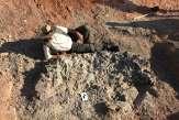 En Argentine, un cimetière de dinosaures datant de 220millions d'années mis au jour