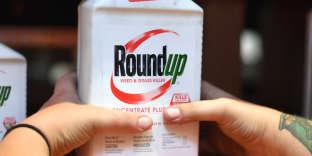 Un exemplaire du Round Up, engrais controversé pour être potentiellement cancérigène.