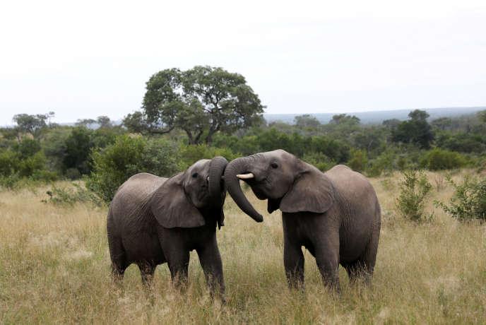 Près du parc national Kruger, en Afrique du Sud, le 12 avril.