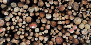 Bûches de pins débitées dans les Landes, le 21 mars.