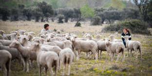 A Salon-de-Provence, le Domaine du Merle, où un centre de formation enseigne le métier de berger transhumant. Le 11 avril 2019.