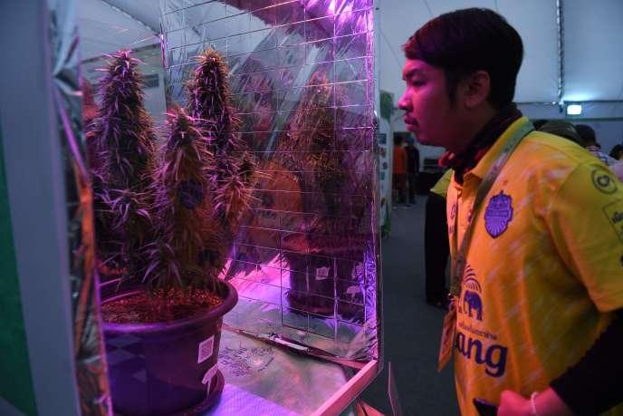 Plusieurs milliers de Thaïlandais assistent samedi 20 avril à la première Fête du cannabis organisée dans le royaume après la légalisation de la marijuana à usage médical.