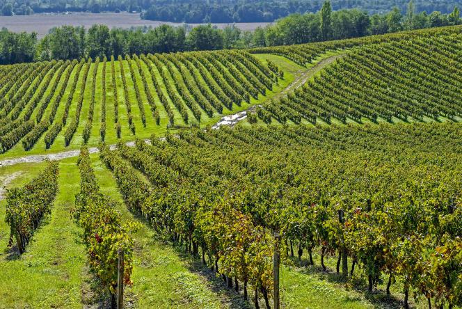 Un vignoble de l'Entre-deux-Mers,sur la rive droite de la Garonne (Gironde).