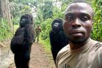 Mathieu Shamavu, gardien dans le parc des Virunga en République démocratique du Congo, se prend en photo avec deux gorilles, le 18 avril 2019.