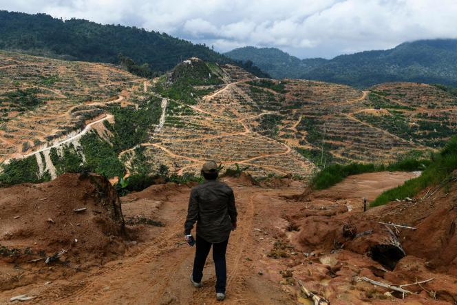 En Malaisie, des hectares de jungle sont détruites pour être converties en plantations de durians, fruits odorants très prisés en Chine notamment. Des juristes cherchent à faire reconnaître la déforestation comme un «crime d'écocide».