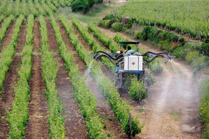 Les pesticides restent utilisés dans certaines exploitations viticoles bordelaises, malgré les associations qui œuvrent pour leur abandon.
