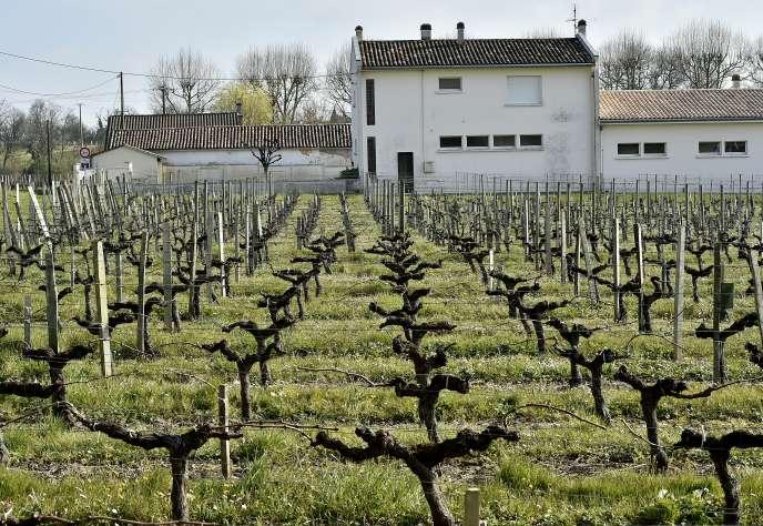 Exploitation viticole, à Villeneuve (Gironde), à proximité d'une école, en mars 2016.