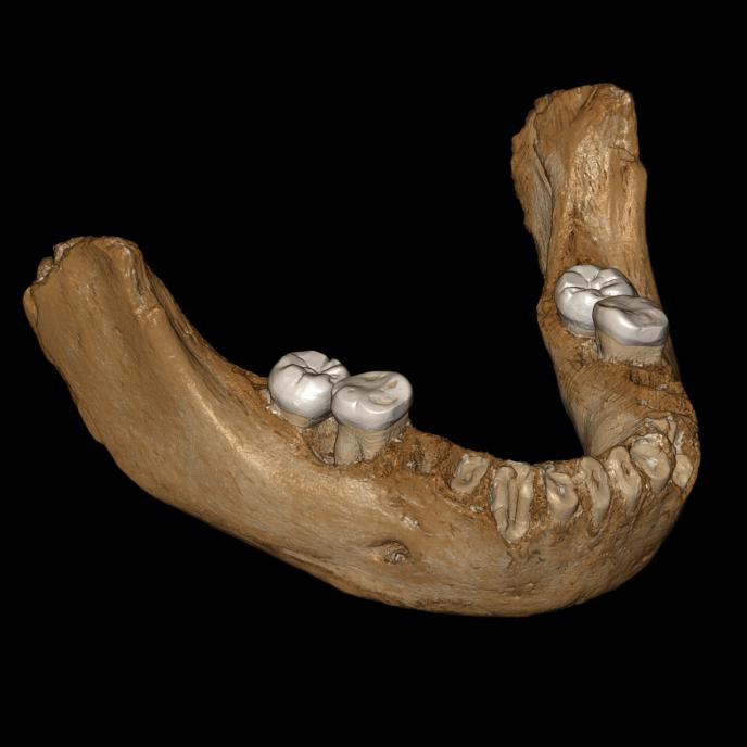 Reconstitution numérique d'une mâchoire de plus de 160000 ans, trouvée dans une grotte tibétaine.