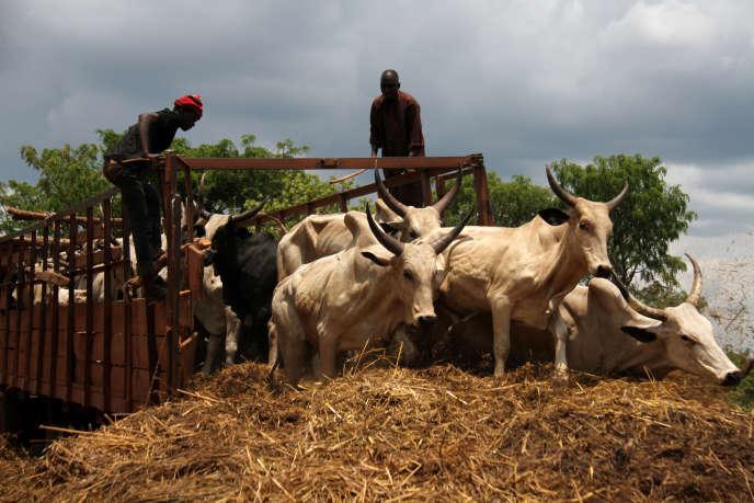 Des vachers payés à la tâche débarquent des vaches venues de Kaga-Bandoro au marché de Bouboui 2, près de Bangui, le 12 avril.