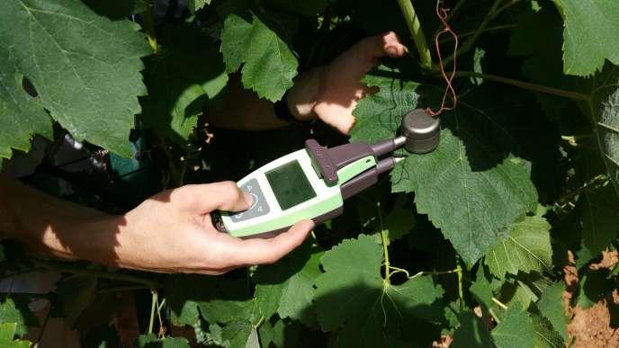 le premier capteur sur les feuilles est un capteur de chrolophylle et de flavonol des feuilles. Il mesure la quantité de chrorophylle dans les feuilles et permet de détecter des stress (hydrique ou carence azoté de la vigne). Le capteur intègre une puce GPS pour pouvoir faire des mesures en parcelles.