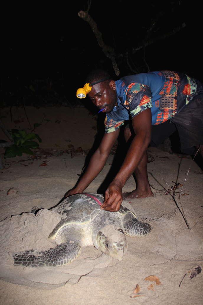 «La tortue est notre emblème. Elle a toujours fait partie de nos vies. La protéger est aujourd'hui notre plus grand devoir. »