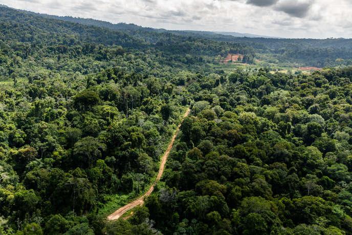 « Dans le cas de la Montagne d'or, l'industriel n'a pas encore déposé le projet et peut donc, en déposant son dossier après la réforme, revenir à la charge avec quelques ajustements pour le rendre acceptable » (Guyane, à proximité du site de la Montagne d'or, en octobre 2017).
