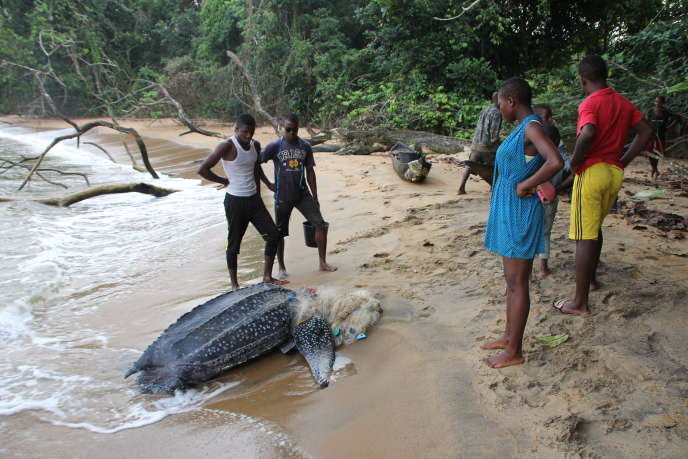 Des habitants d'Ebodjé, village camerounais au bord de l'Atlantique, au chevet d'une tortue marine prisonnière d'un filet de pêche, en 2018.