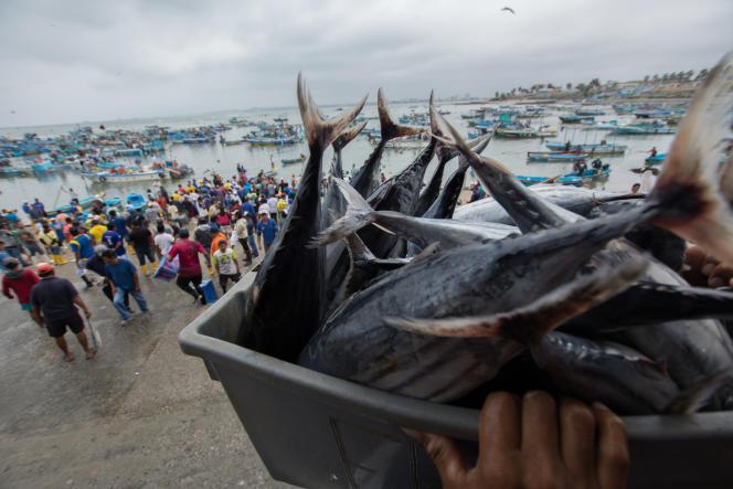 Au port de Santa Rosa de Salinas, en Equateur, en octobre 2018.