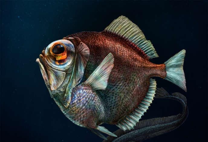 La dirette argentée dispose sur la rétine de quatorze types de bâtonnets photorécepteurs pour percevoir la couleur malgré la quasi absence de lumière au fond des océans.