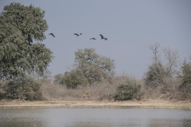 Le parc national de la Pendjarin, dans le nord du Bénin, en janvier 2018.