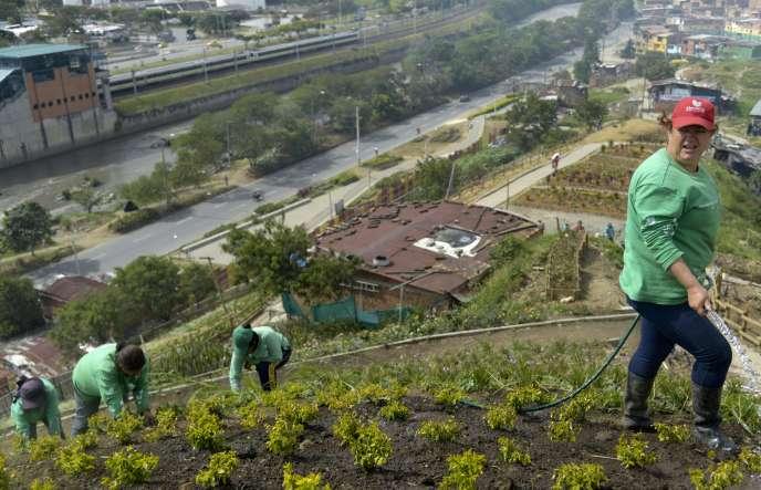 Medellin (Colombie), le 9 avril 2014. Les femmes du quartier de la Moravia ont créé une coopérative et cultivent des plantes sur ce qui était auparavant une montagne de déchets.