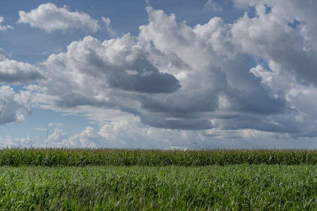 Avant la réserve kayapo, les champs de maïs ou de soja transgéniques s'étendent à perte de vue.