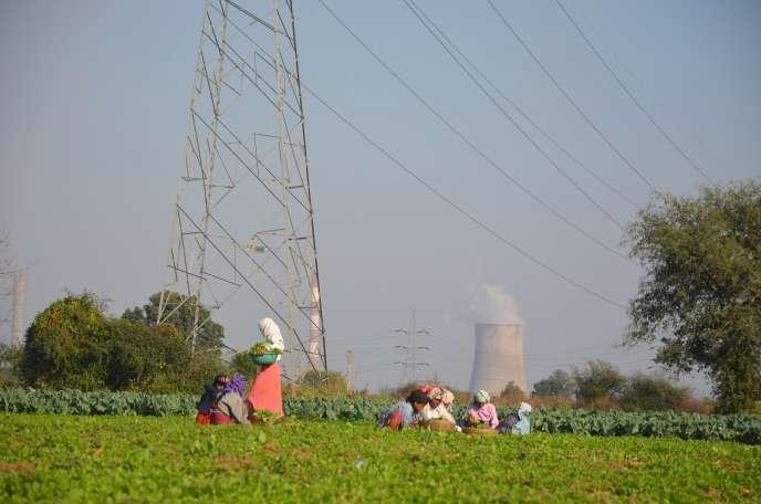Plantations à proximité de Nagpur, dans le centre de l'Inde, en janvier.
