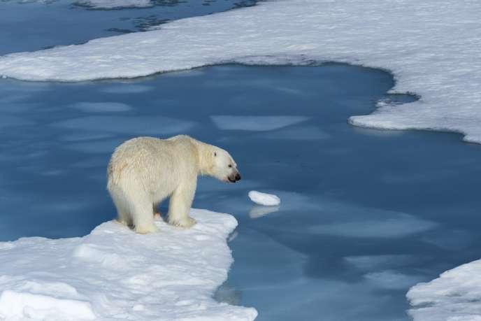 «Et il ne s'agit pas uniquement de climat, mais d'une guerre engagée contre le monde vivant. Nous avons fait disparaître 60 % des populations des animaux vertébrés en quarante ans, 75 % des insectes en trente ans, 30 % des oiseaux des champs, la moitié des animaux marins» (Ours polaire au Svalbard).