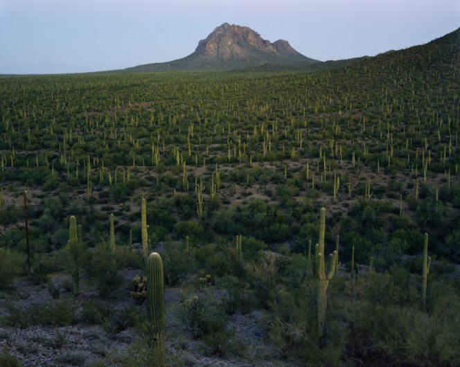 Ironwood Forest National Monument, Arizona,2018.