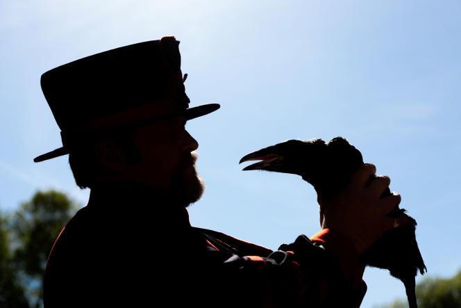 L'éleveur Christopher Skaife et un jeune corbeau, à la Tour de Londres, le 14mai2019.
