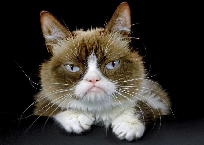 Grumpy Cat en 2015.