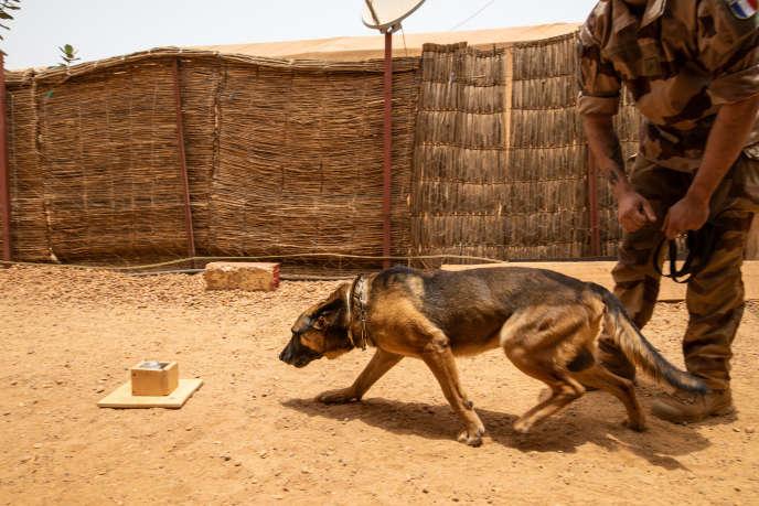 Horben et son maître, le sergent Romain, lors d'un exercice sur la base militaire française de l'opération «Barkhane» à Gao (Mali), le 26 avril.