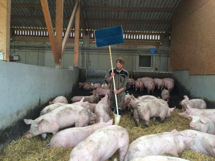 Nicolas Koch, tenant à bout de bras un panneau de couleur bleu outremer, au milieu des cochons.