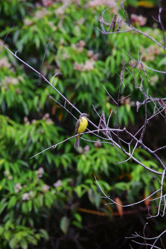 Le parc national de Soberania abrite plus de 500 espèces d'oiseaux, au Panama.